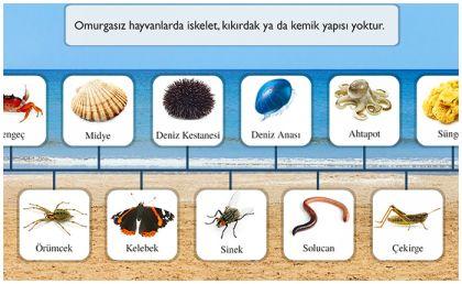 canlıları tanıyalım ile ilgili görsel sonucu